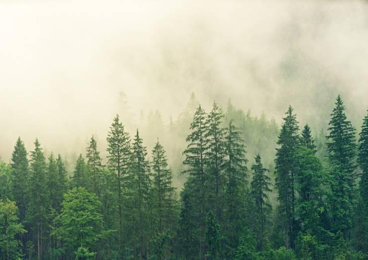 Közlemény körzeti erdőtervezési eljárás megindításáról